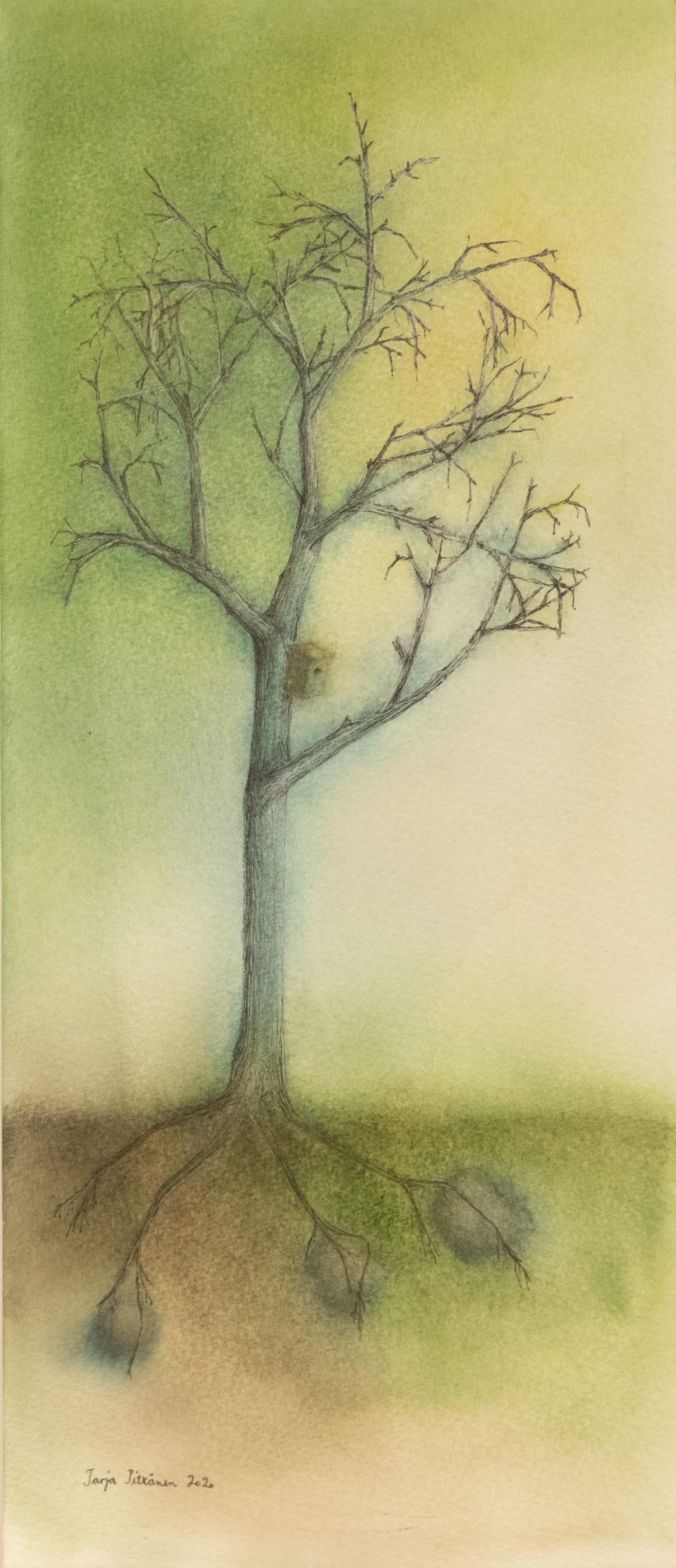 sukupuussa